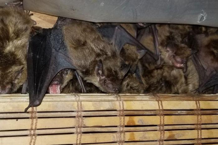 bat guano cleanup
