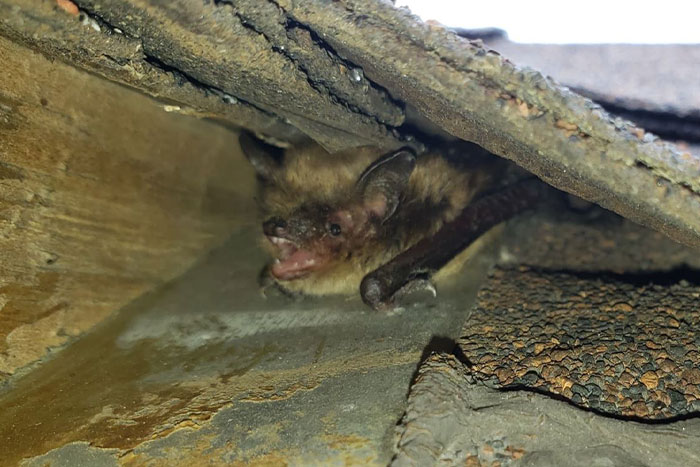 bat exterminator