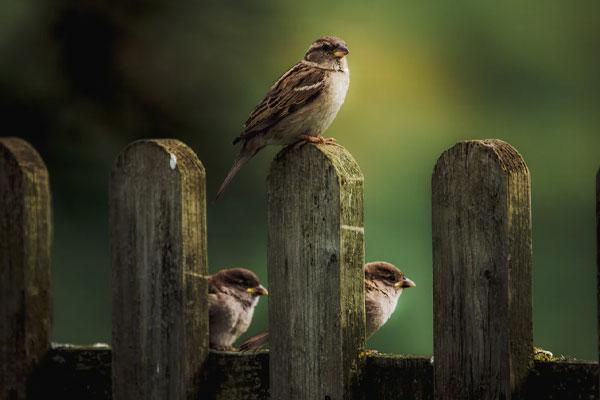 Unspash Sparrow  - cincinnati bird removal